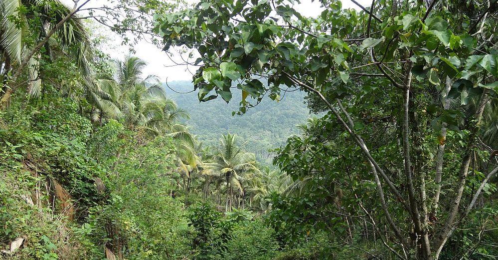 Indien auf der Plantage Thonikadavu 2